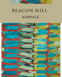 Beacon Hill Animale