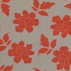 New Peony | Coral